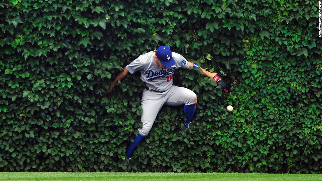 Enrique Hernandez, center fielder for the Los Angeles Dodgers, falls into Wrigley Field's ivy as he tries to make a catch Thursday, June 25, in Chicago.