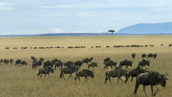 Wildlife roams freely in Kenya's Maasai Mara, drawing in swathes of safari tourists every year. This is putting a lot of pressure on the area's resources, says Stefaan Poortman, executive director of the Global Heritage Fund.