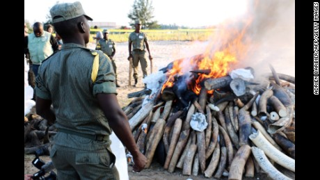 Mozambican authorities  stand near a burning pile of ivory and rhino horns in Maputo on July 6.
