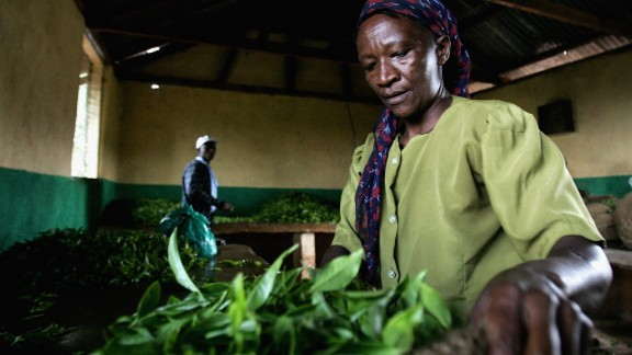 """Kenya is one of the largest tea producers in the world, trailing behind China and India. According to The Tea of Board of Kenya, exports have quadrupled in the past decade after disastrous droughts saw crops falter in 2006. Locals enjoy their tea with milk and sugar or """"strunggi"""" -- black. Another popular variation is """"tangawizi,"""" with additional ginger steeped with the tea leaves."""
