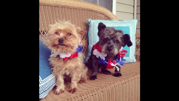 """To make his final days as enjoyable as possible, Elliott spoiled Chester with a """"bucket list"""" full of treats and activities. Here he is with Pierre, Elliott's other dog."""