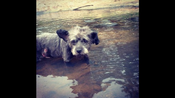 """One day Elliott took Chester to a nearby park, where he splashed around in the water. """"I have been trying to get a feel for what he is capable of,"""" she said."""