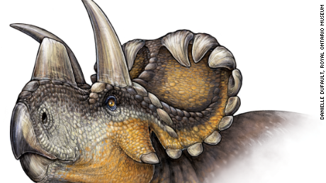 The Wendiceratops' nose horn is a kind of missing link in the evolution of dinosaurs