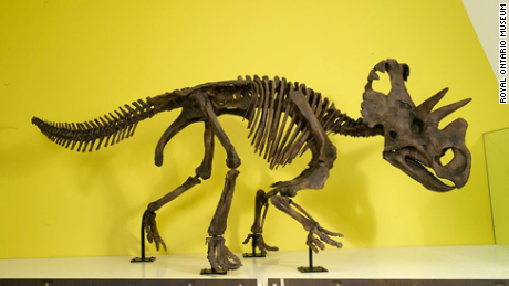 The Wendiceratops model can be viewed at Toronto's Royal Ontario Museum.