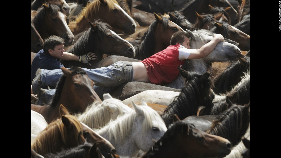 A reveler tries to hold on to a wild horse Sunday, July 5, during the Rapa das Bestas, or shearing of the beasts, in Sabucedo, Spain. During the four-day festival, wild horses are rounded up and wrestled to the ground to have their manes and tails sheared.
