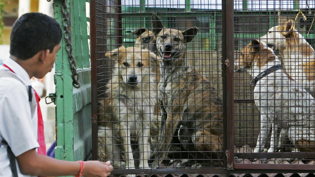Stray dogs inside a cage on the back of a truck in Bangalore, India.