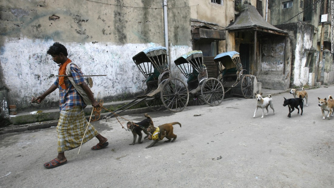 An Indian man walks with his monkeys followed by stray dogs in Kolkata on December 10, 2008.