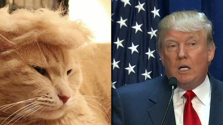 150714204025 moos trump your cat meme erin 00000918 exlarge 169 trump cats' feature felines with crazy hairlines cnn video