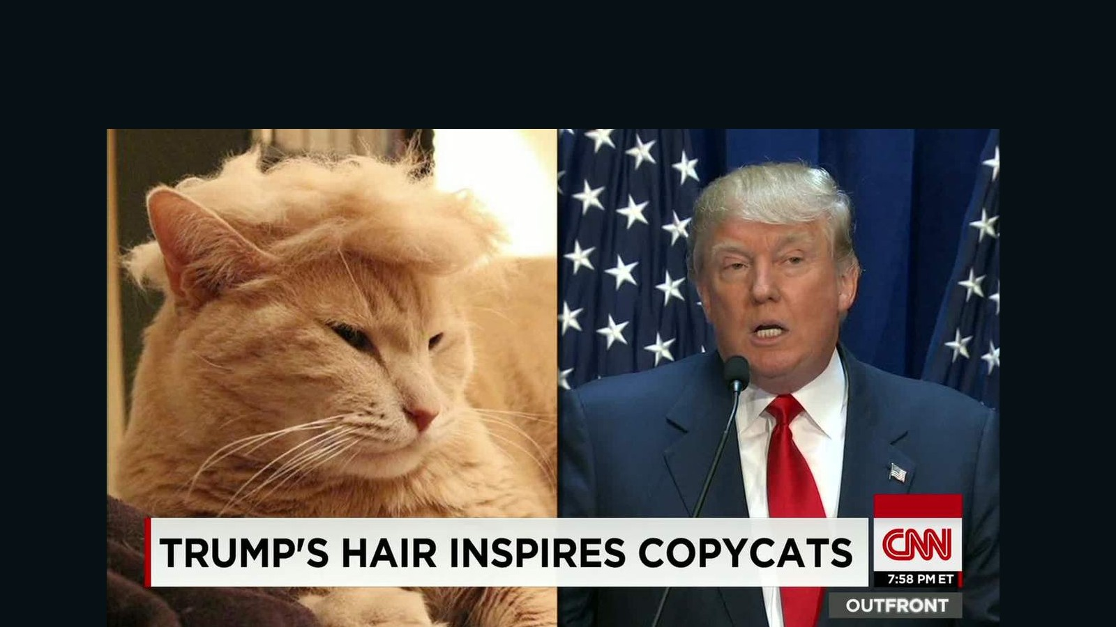 150714204025 moos trump your cat meme erin 00000918 full 169 trump cats' feature felines with crazy hairlines cnn video