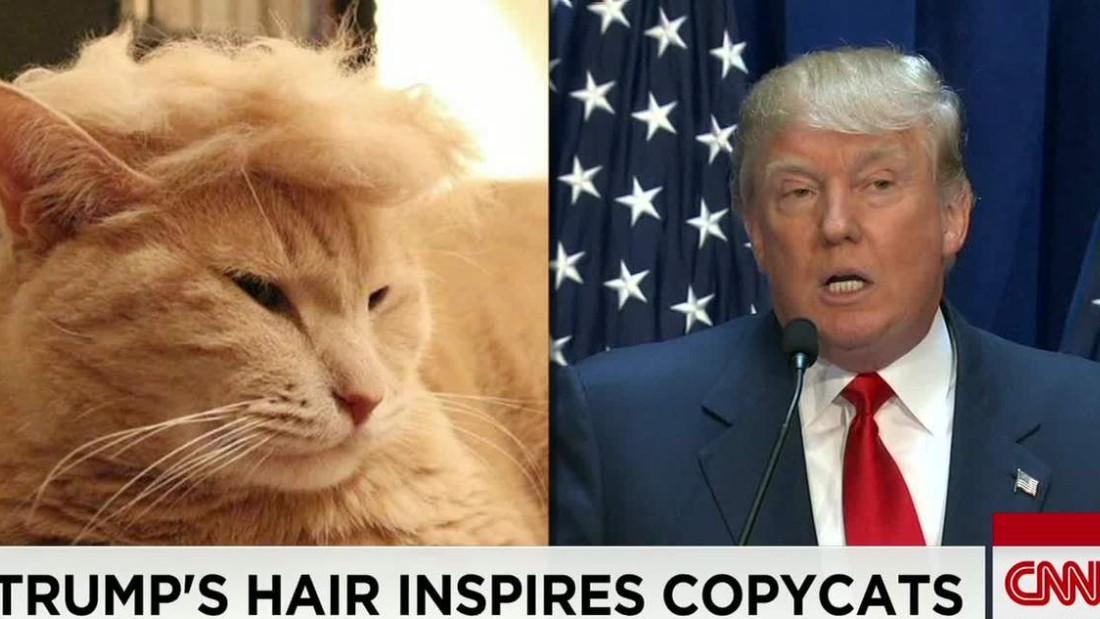 150714204025 moos trump your cat meme erin 00000918 super 169 trump cats' feature felines with crazy hairlines cnn video