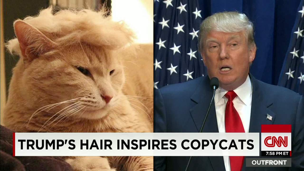 Trump Cats Feature Felines With Crazy Hairlines Cnn Video