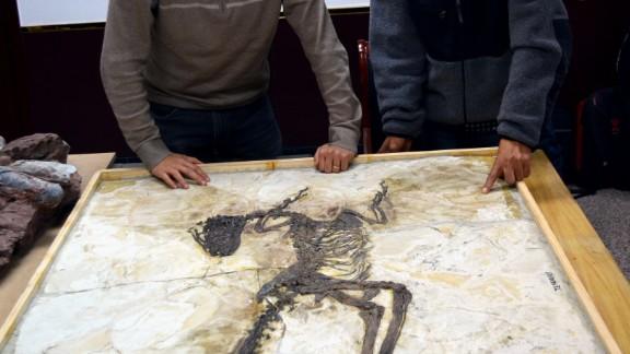 Steve Brusatte, left, and Lu Junchang post in front of the Zhenyuanlong skeleton