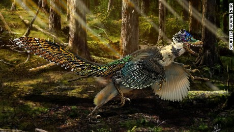 China discovers winged, feathered & # 37; dragon & # 39; dinosaur