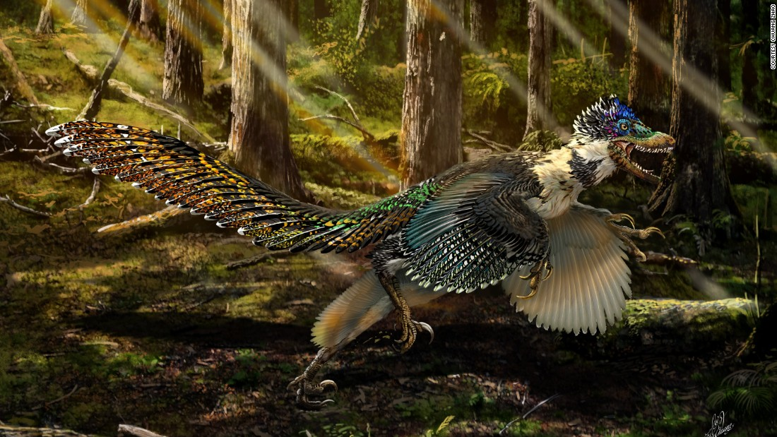 An illustration by artist Chuang Zhao of the Zhenyuanlong, a newly-discovered large, short-armed, winged dinosaur.
