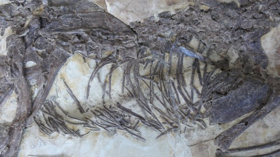The body of Zhenyuanlong. The creature is two meters long, and weighs about 20 kilograms.