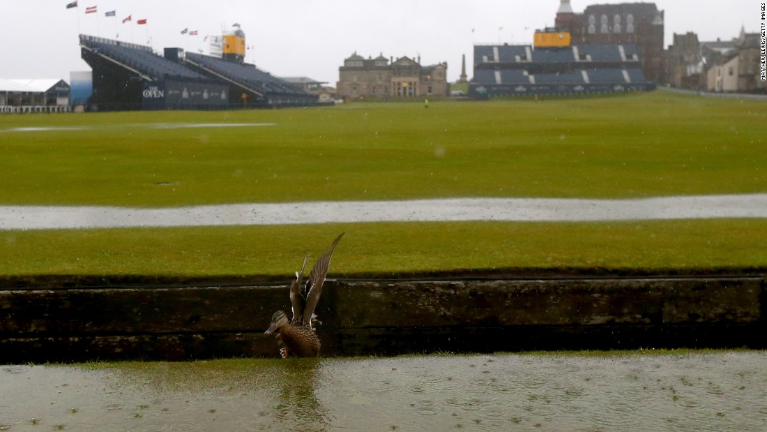 A duck makes the most the the wet conditions.
