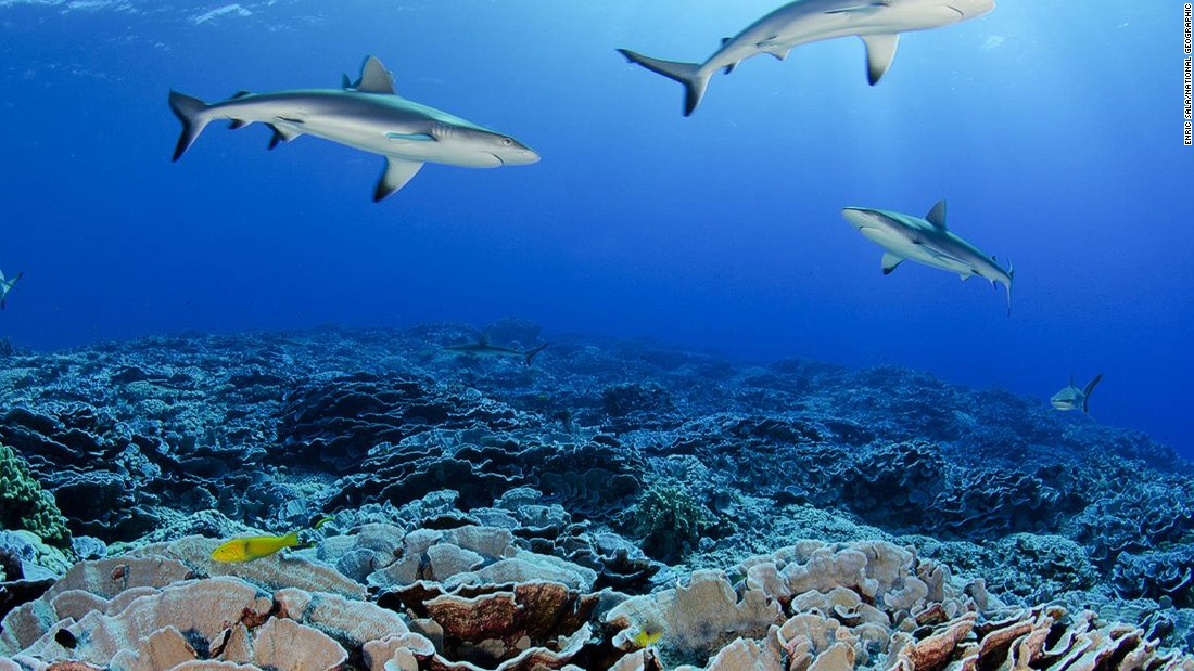The goal of the Pitcairn Islands Marine Reserve is to protect the wealth of the ocean from illegal fishing activities and safeguard endemic species like butterfly fish and squirrelfish, among others.