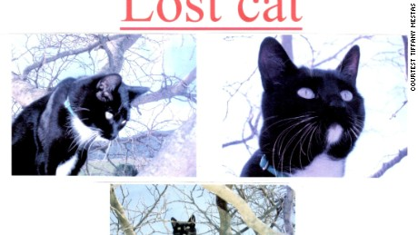 Tiffany Mestas says she put up posters for her lost tuxedo cat named David when he went missing in 2007. Now her lawsuit says she's trying to get him back after he was stolen.