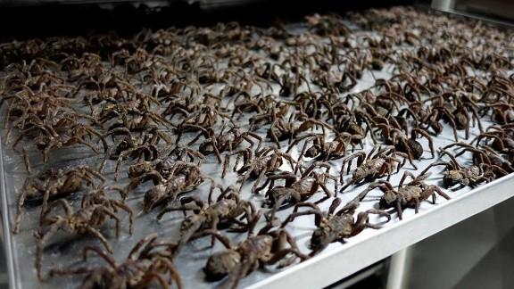 Drying tarantulas at a Thailand Unique facility.