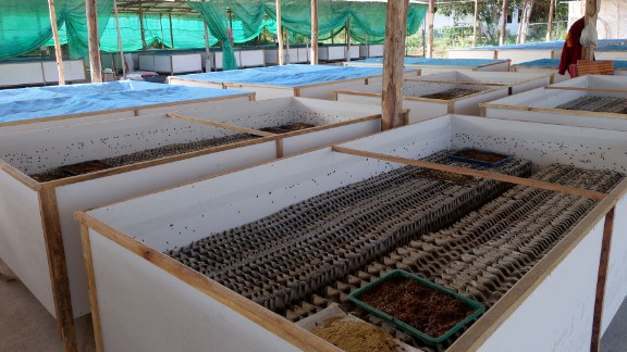 This cricket farm is in Thailand, which is among the global leaders of the trade, where 20,000 farms produce 75,000 tons of edible insects.