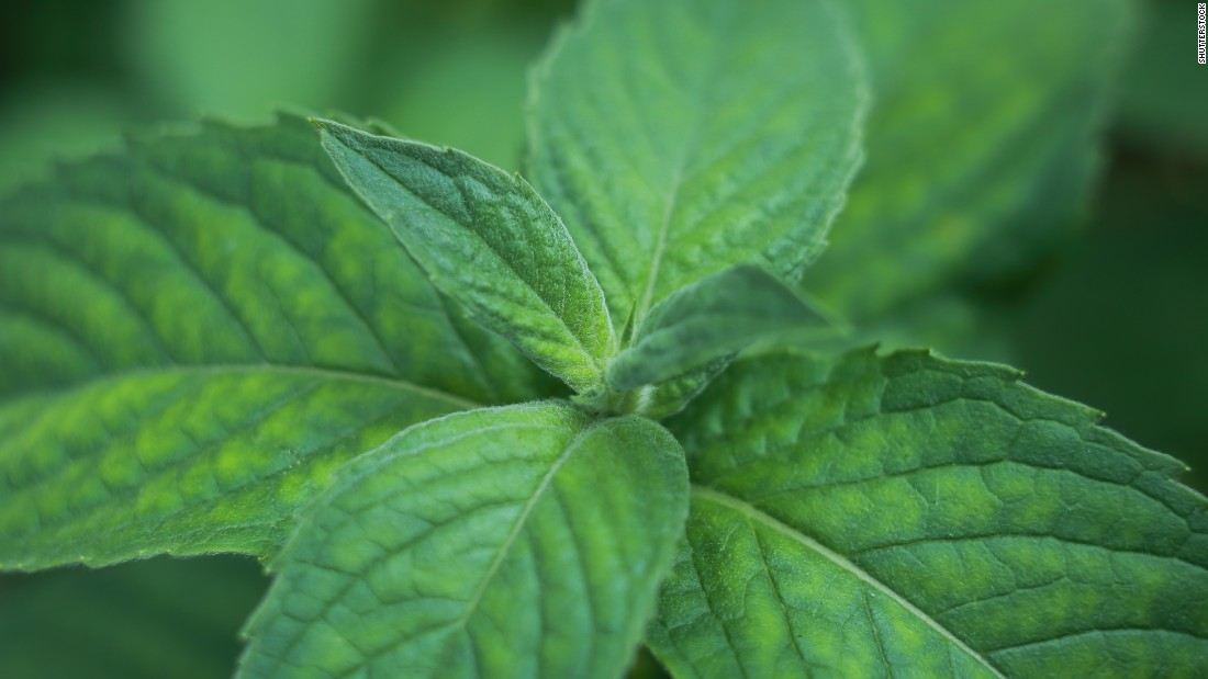 Peppermint oil is prescribed to help treat abdominal cramping and irritable bowel syndrome (IBS).