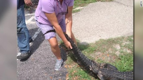 woman fights alligator to save dog pkg_00003114.jpg