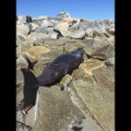 02.plymouth-beached-whale.IMG_5150.JPG