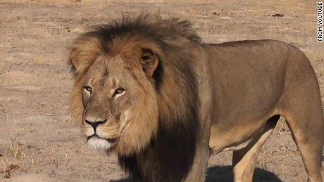 U S  dentist wanted for killing Cecil the lion - CNN