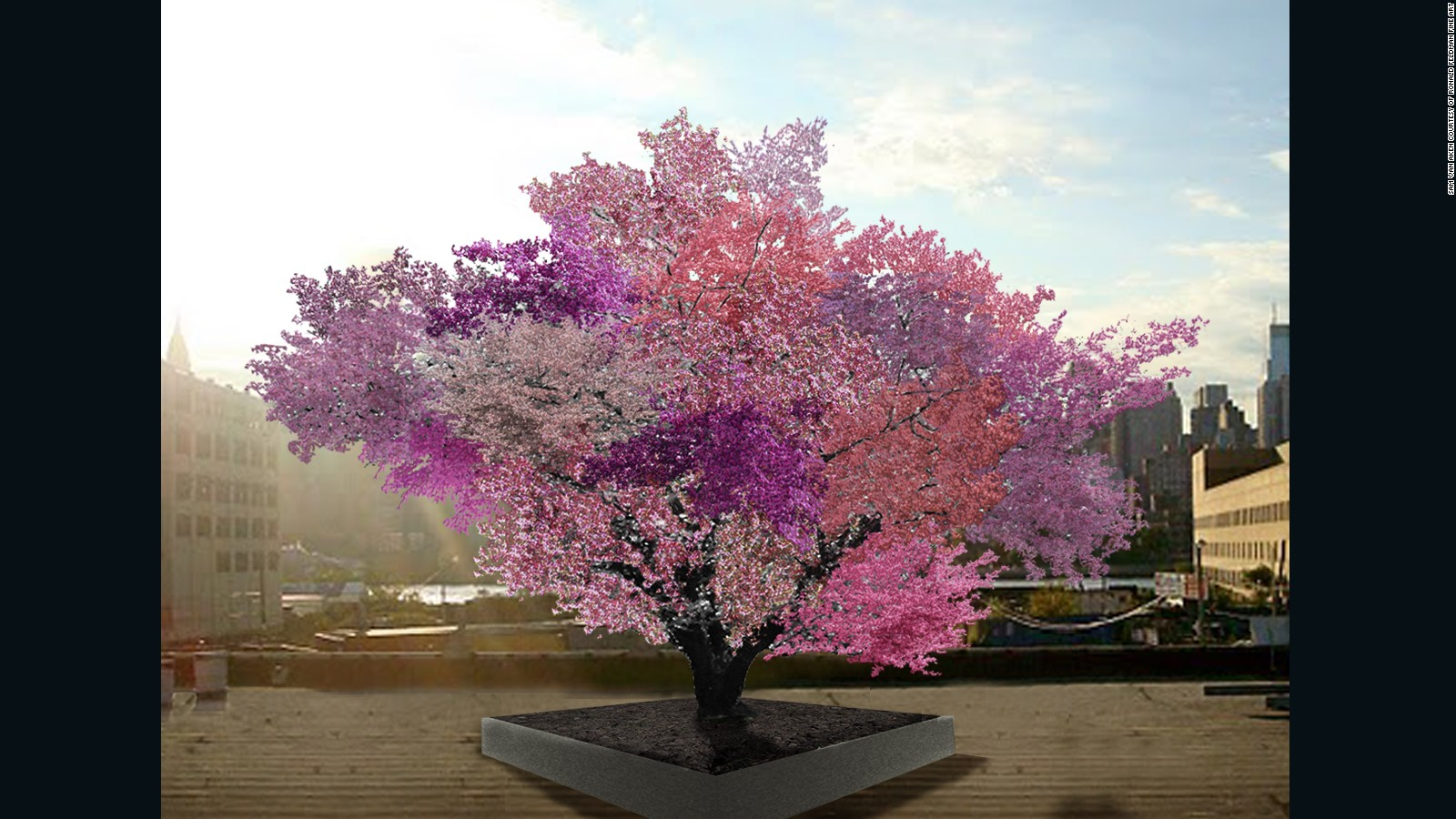 Growing 40 Types Of Fruit On One Tree Cnn