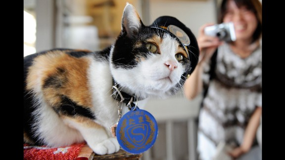 Tama, a Japanese cat, became celebrated as the friendly stationmaster of the Kishi rail station in Kinokawa -- part of a railway line that she helped save from shutting down, thanks to her popularity, which brought in millions of dollars. Tama died June 22. She was 16. Her funeral was attended by 3,000 people.