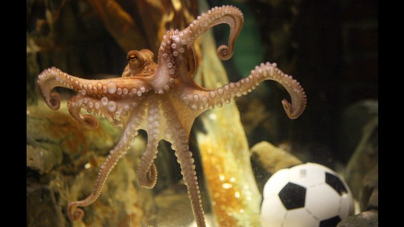 It's not often that an octopus becomes widely admired, but when you can pick World Cup winners, you can write your own ticket. Paul the octopus, a resident of the Sea Life Centre in Oberhausen, Germany, correctly predicted the winner of every German match in the 2010 World Cup -- and then nailed the final, too. He died of natural causes a few months later.