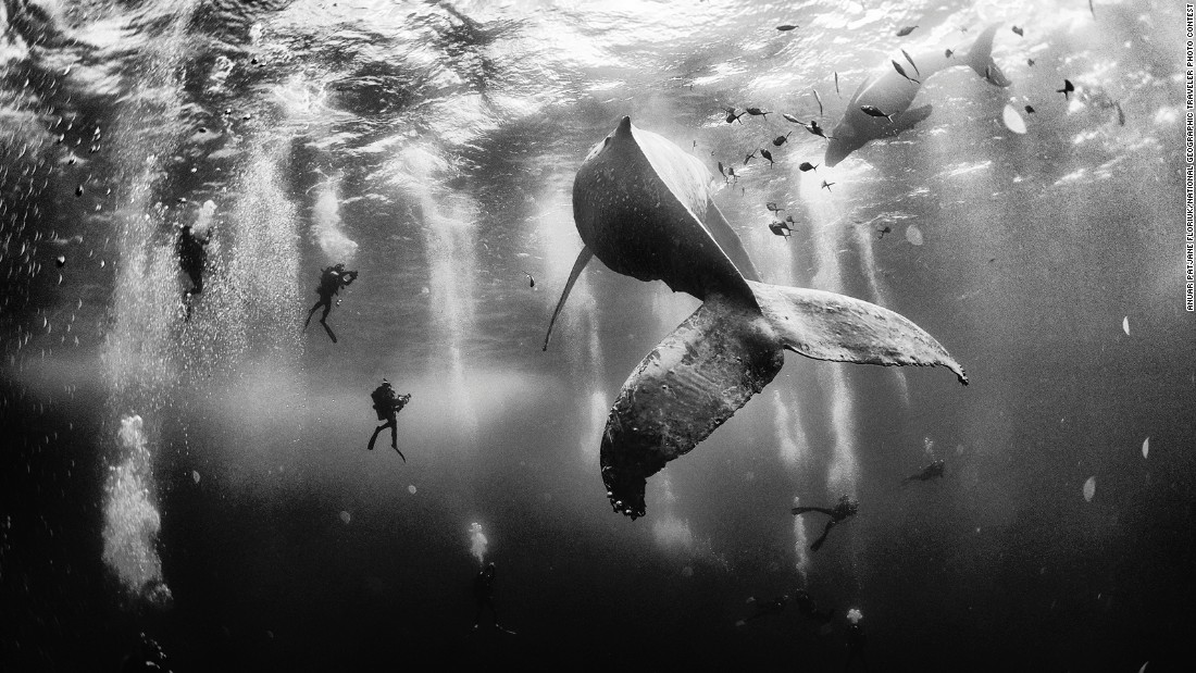 "<a href=""http://www.cnn.com/2015/08/03/world/gallery/national-geographic-traveler-photo-contest-winners/index.html"" target=""_blank"">This year's National Geographic Traveler Photo Contest </a>received more than 17,000 entries from photographers around the world. Grand-prize winner Anuar Patjane Floriuk will get an eight-day expedition to Costa Rica and the Panama Canal for this photo, ""Whale Whisperers."""