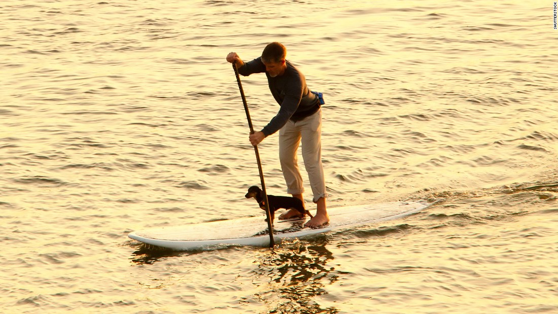 Dogs of all sizes can ride on the nose of a paddleboard while you get a killer ab workout. Odds are you're both going to fall in at some point, so be sure to get life preservers for two.