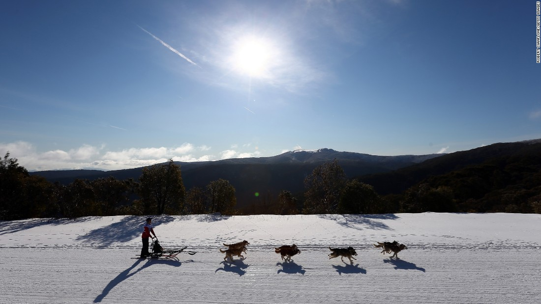 A competitor in Australia takes part in the Mt. Buller Sled Dog Quest on Wednesday, July 29.
