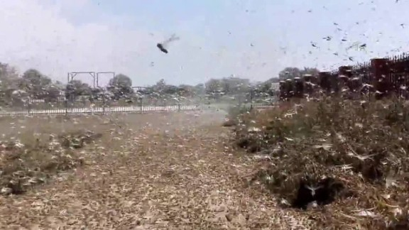 Russia locust invasion plague agriculture farmer pkg chance_00000611.jpg