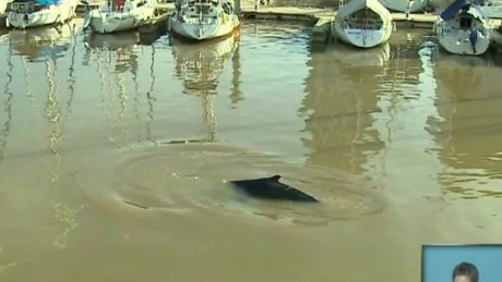 cnnee vo whale appears in Argentina_00001614