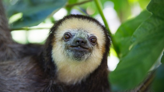 """""""When I release a sloth, I feel really happy because the animal is where he belongs. That's the ultimate goal of my work,"""" Pool said. """"Wild animals belong in the wild."""""""