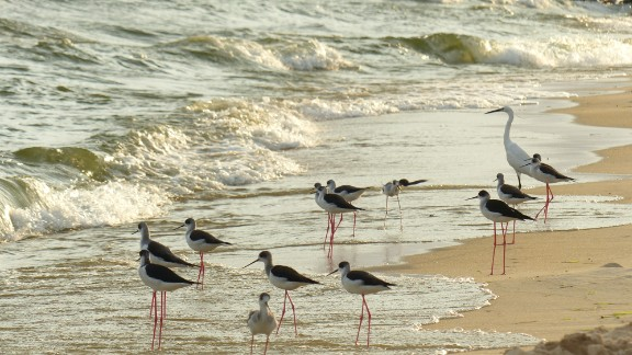 Entebbe is expected to welcome just under half a million visitors in 2015. Birds enjoy the water on Lido Beach, Entebbe.   Top 10: Africa's 'Cities of Opportunity' revealed