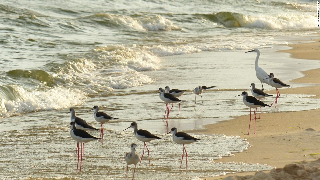 "Entebbe is expected to welcome just under half a million visitors in 2015. Birds enjoy the water on Lido Beach, Entebbe. <br /><br /><a href=""/2015/03/17/africa/africas-top-ten-cities-for-investors/index.html"" target=""_blank""><strong>Top 10: Africa's 'Cities of Opportunity' revealed</strong></a>"