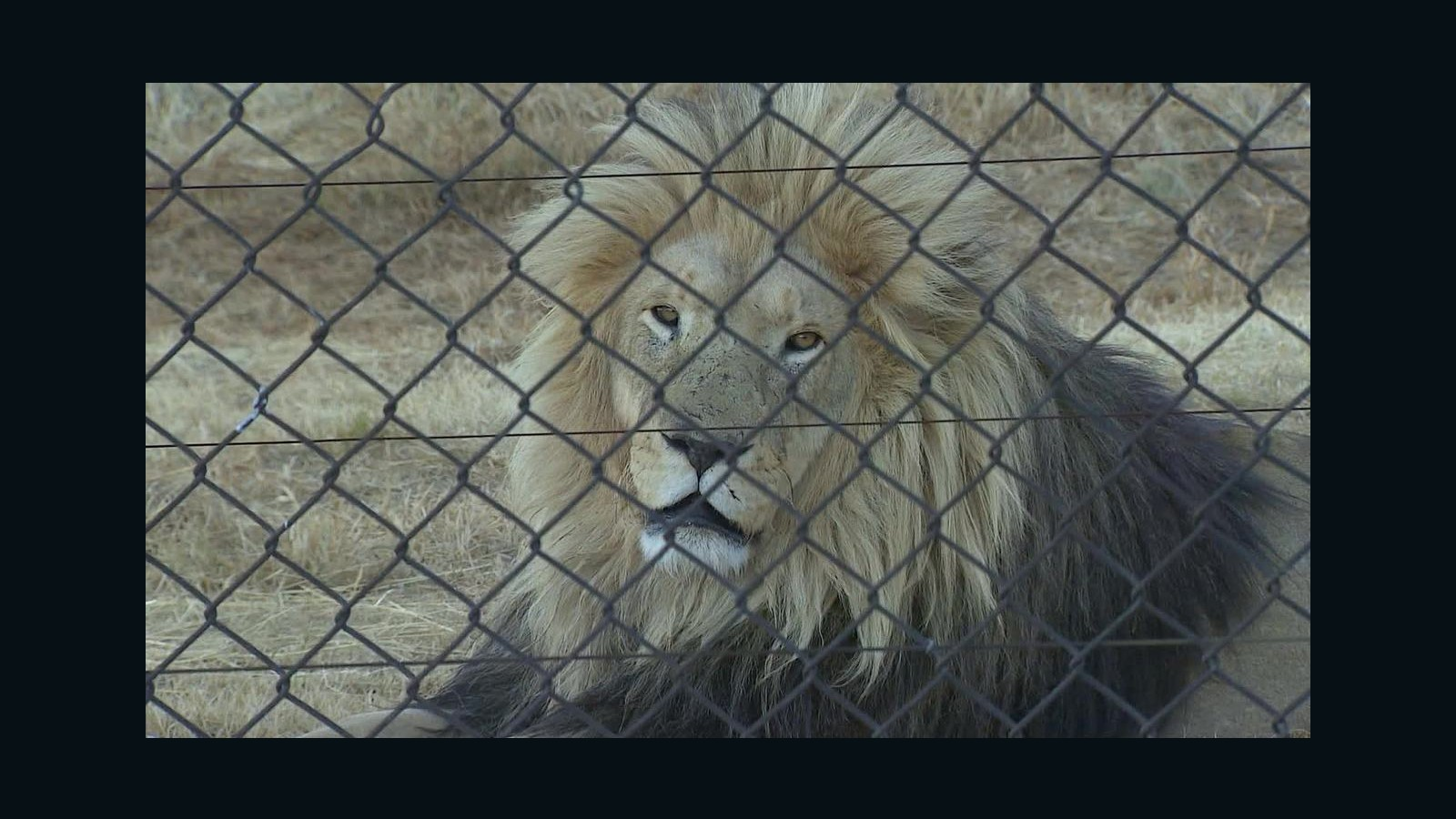 Image of: Petition Ending Trophy Hunting Could Actually Be Worse For Endangered Species Cnn Cnncom Ending Trophy Hunting Could Actually Be Worse For Endangered Species