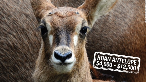 """Mainly found roaming the savannahs of West and Central Africa, the Roan antelope can run up to 35 miles per hour. Hunters can pay up to $12,500 to be hot on their heels in South Africa, or $4,000 in Tanzania. The animal's conservation status is of """"least concern""""."""