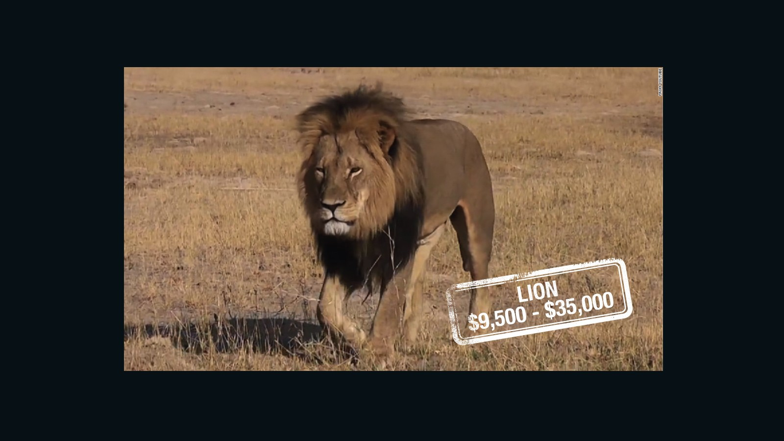 lion s share prices on the heads of trophy animals