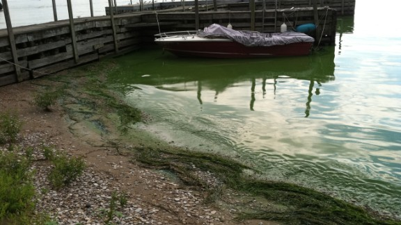 Algal bloom in Lake Erie, Kelley's Island. October 16, 2011. Photo: T. Joyce, NOAA.