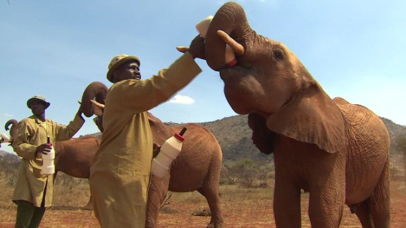 saving elephants kriel pkg_00000725.jpg