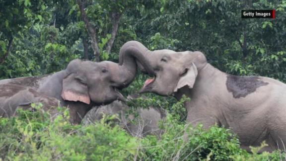 world elephant day orig_00013305.jpg