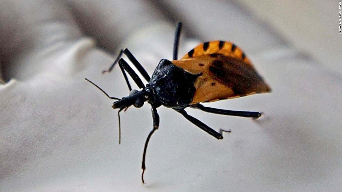 "Chagas disease is spread by the triatomine bug  -- nicknamed ""kissing bugs"" -- which carries the parasite Trypanosoma cruzi. Over time, the parasite can chew through cardiac muscle and cause heart failure causing an estimated 11,000 deaths globally each year."