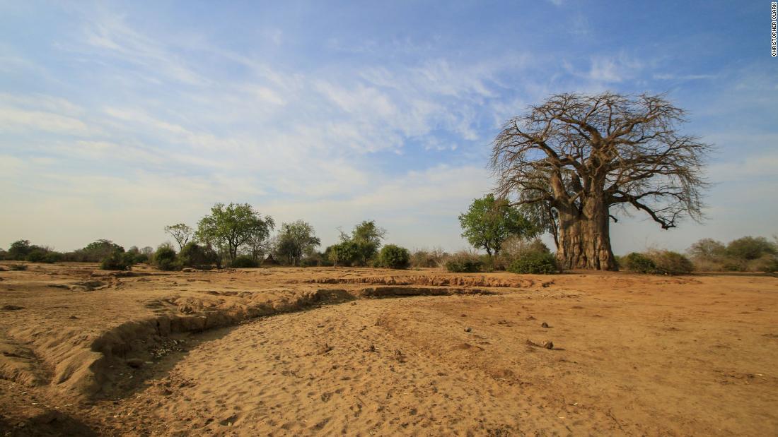 A baobab tree, Lower Zambezi in Zambia.