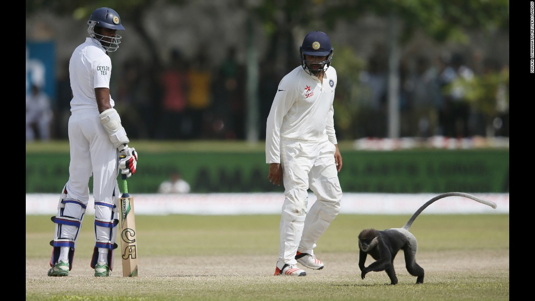 Sri Lanka's Jehan Mubarak, left, and India's Rohit Sharma watch as a monkey runs past them during a cricket match in Galle, Sri Lanka, on Friday, August 14.