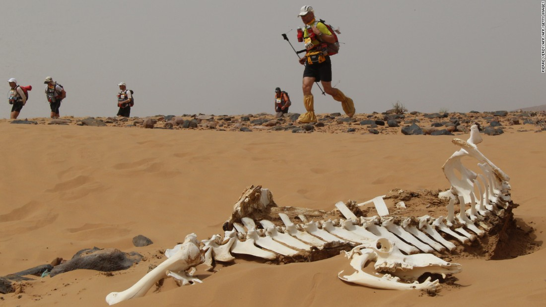 "Started in 1986, the <a href=""http://www.marathondessables.co.uk/site/"" target=""_blank"">Marathon des Sables</a> is held in southern Morocco's Sahara Desert. It covers 156 miles over six days... including the odd camel skeleton."
