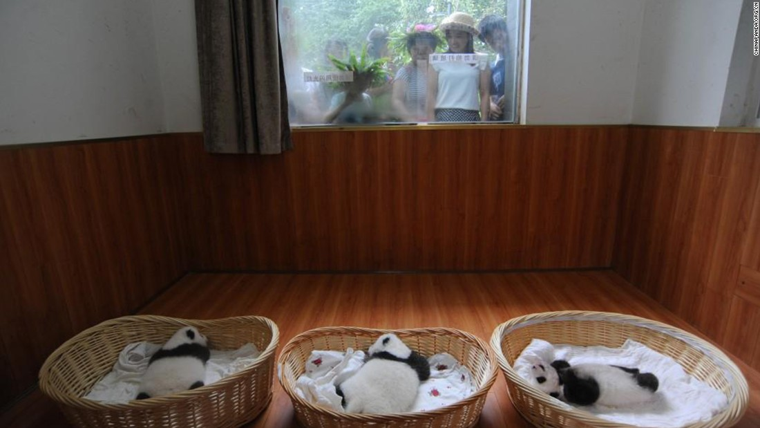 People catch a glimpse of the pandas.